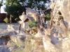 猿山のサル