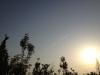 朝日に飛行機雲