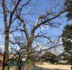 29年12月21日 西洞公園の木